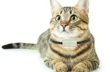 Fabriquez votre collier répulsif naturel pour chien et chat