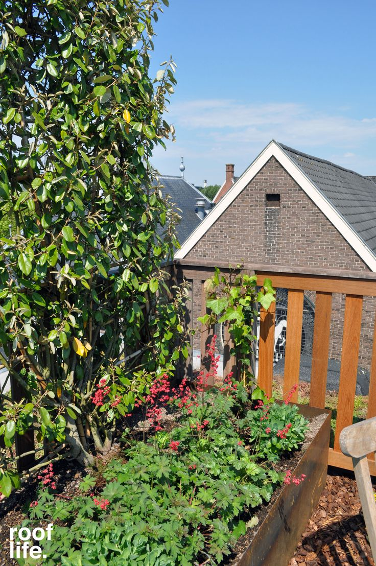 Een daktuin met Olijfwilg, Heuchera, geranium, ooievaarsbek en hemelsleutel in cortenstaal bak
