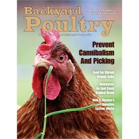 Backyard Poultry Magazine - 1 year subscription from My Pet Chicken
