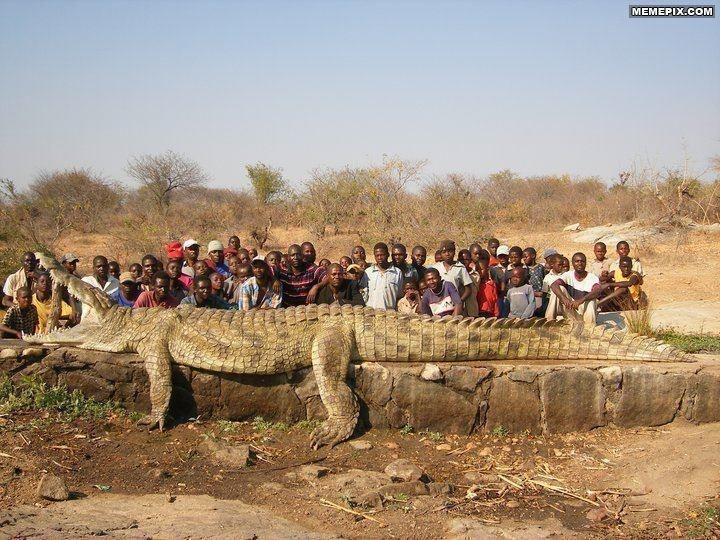 Not a biggie, just a 22 foot, 2500 pounds crocodile - MemePix
