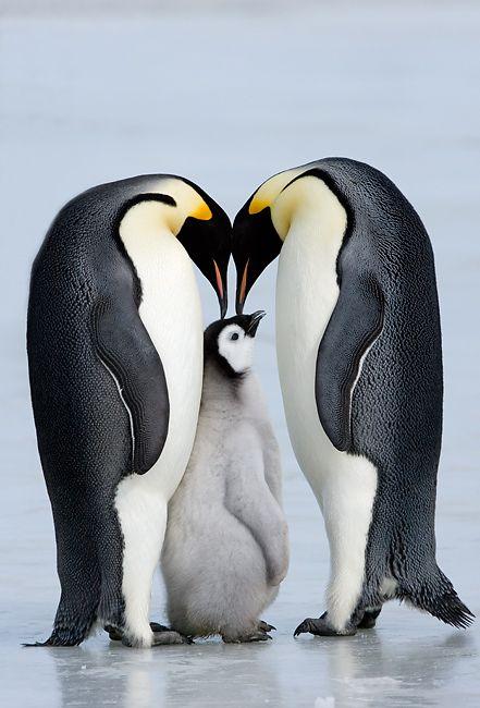 1000 ideen zu pinguin zeichnen auf pinterest pinguin malen geschenkt te lagerung und bilder. Black Bedroom Furniture Sets. Home Design Ideas