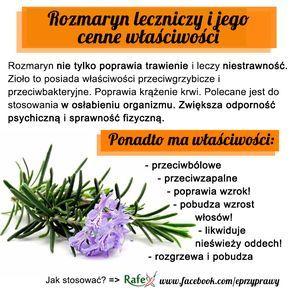 Blog o zdrowym i naturalnym odżywianiu, ziołach, przyprawach i roślinach.: ROZMARYN LEKARSKI i jego cenne właściwości
