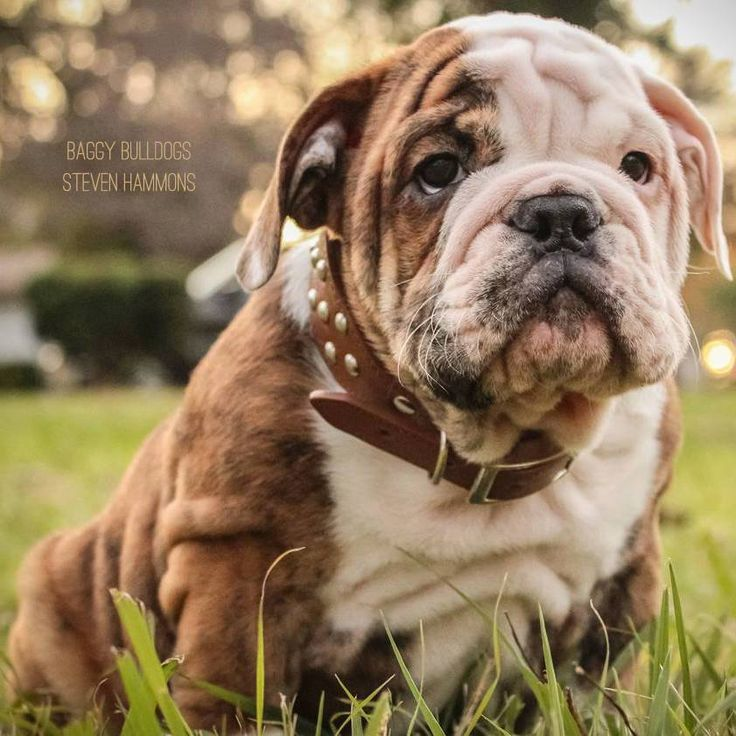 (4) Baggy Bulldogs - Baggy Bulldogs added a new photo.