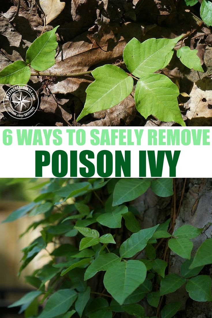 6 Ways To Safely Remove Poison Ivy From Your Property Poison Ivy