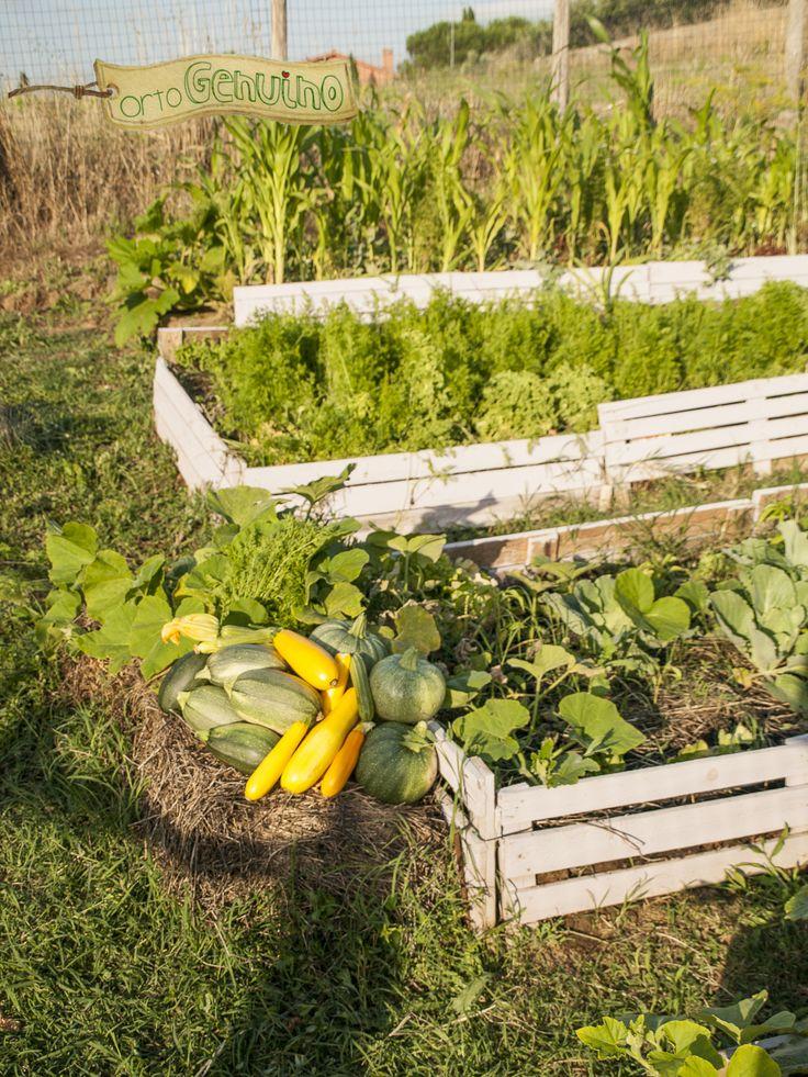 #ortiurbani #organicfood #bio #vegetable #vegetarian #organicvegetables #urbanfarming #mygarden #ortogenuino #km0 #metri0 #orto #roma #green