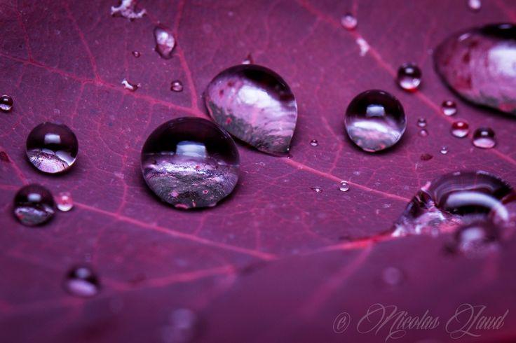 drops - macro lens 100mm L is