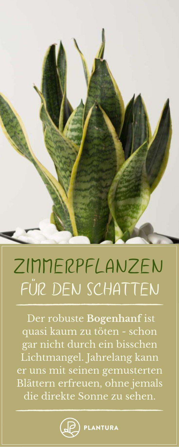 Schattenliebende zimmerpflanzen unsere top 10 for Zimmerpflanzen ideen