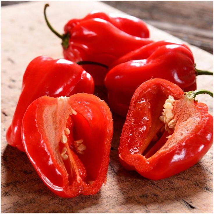 Red Habanero Pepper Seeds (Capsicum chinense)