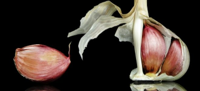 Πώς το σκόρδο, ο πιο βρωμερός καρπός εξοντώνει όλες τις αρρώστειες και είναι υπερτροφή δύναμης
