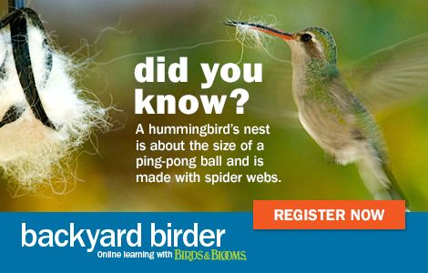 Learn everything you ever wanted to know about hummingbirds with our new online class! Visit the Birds & Blooms website to learn more.