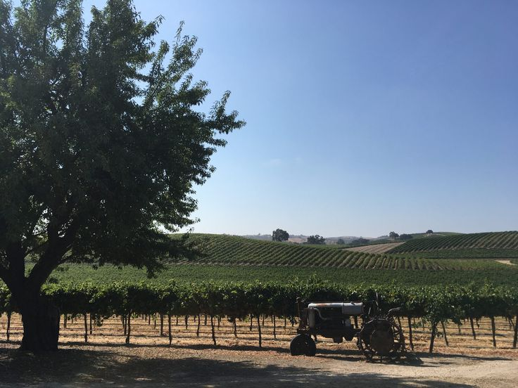 The Passion for Paso Robles Cabernet. Vineyard View of Pomar Junction Winery. Paso Robles, CA