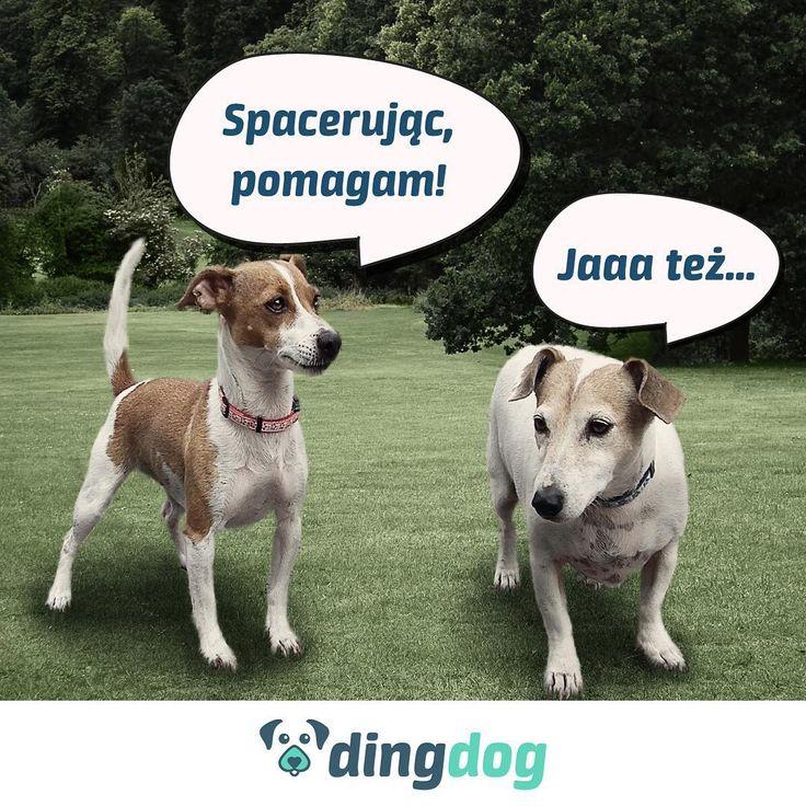 Minimum 10% z każdej złotówki z Waszych abonamentów przeznaczymy na to, żeby zwierzakom żyło się lepiej Emotikon smile Czyste zasady: co miesiąc publikujemy podsumowanie z PayU. Razem współtworzymy pierwszą taką (i to polską!) aplikację i pomagamy, czyli merdamy świat!  #DingDog #startup #app #dog #merdamyświat
