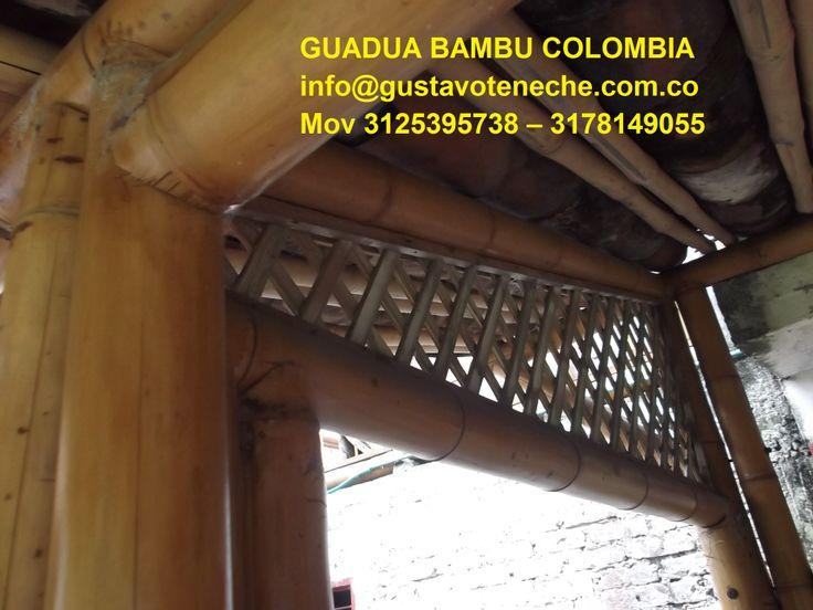 GUSTAVO TENECHE - MOB 3125395738