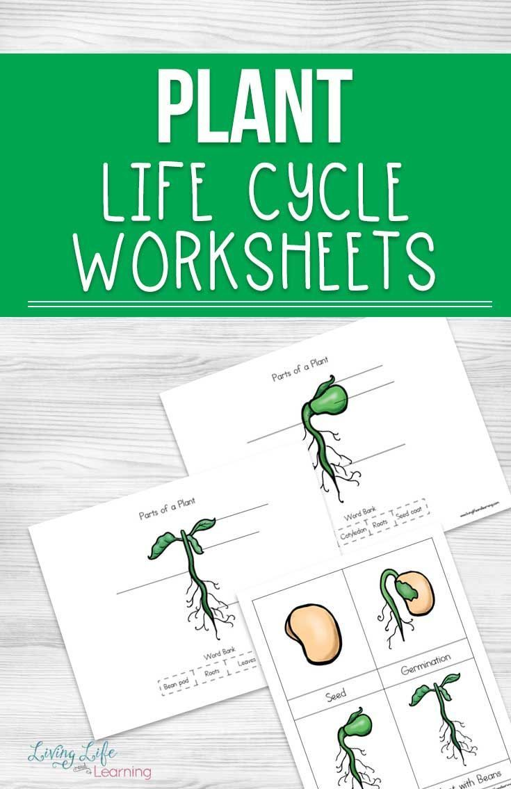 Plant Life Cycle Worksheets For Kids Plant Life Cycle Worksheet Plant Life Cycle Life Cycles [ 1135 x 735 Pixel ]