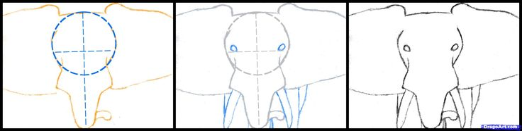 Draw an Elephant Head, African Elephant, Step by Step, Drawing Sheets, Added by finalprodigy, March 13, 2012, 5:20:30 pm