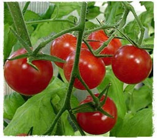 Tips for the Beginner on Planting Your First Vegetable Garden