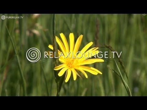 Einschlafmeditation für Kinder: Der Schmetterling | Entspannt einschlafen - YouTube