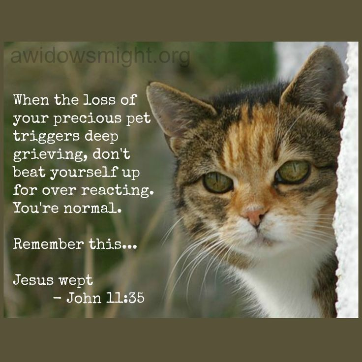 One of our readers found herself lost in tears when her cat fell ill and asked for prayer that she have clarity and discernment over tears for the cat vs tears for her husband. Read how Jesus wept and our perspective on our weeping through grief is is what keeps our tears healthy. http://www.awidowsmight.org/2013/10/overreacting-a-widows-loss-of-a-pet/