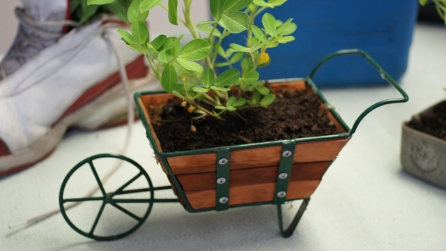 This is 1 of 10 creative planters I made for my TV segment that airs every Saturday at 7:45AM on CBS|KCAL 9 News.  Here's the link to the segment  http://losangeles.cbslocal.com/video/7729751-green-expert-nick-federoff-offers-tips-on-repurposing-containers/