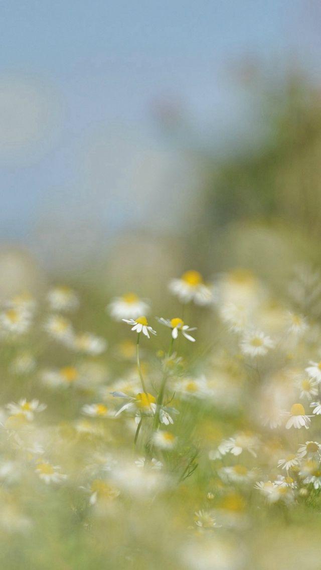 Flower Bokeh White Spring Nature #iPhone #5s #wallpaper