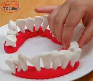 Learn about TEETH SHAPES and their purpose - fun activity and craft from the Our Time to Learn blog, science for ages 3-6. Workbook series for preschool, kindergarten, home school, human body, body systems.