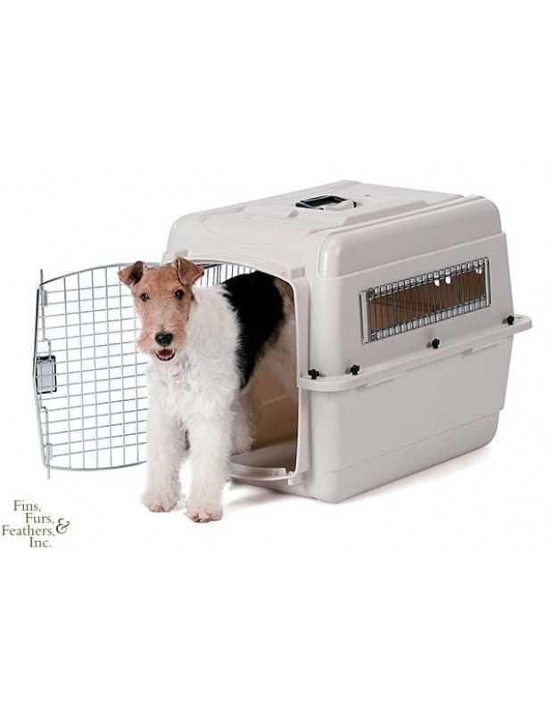 Kountry pet resort wheaton illinois pet resort dog boarding training positive