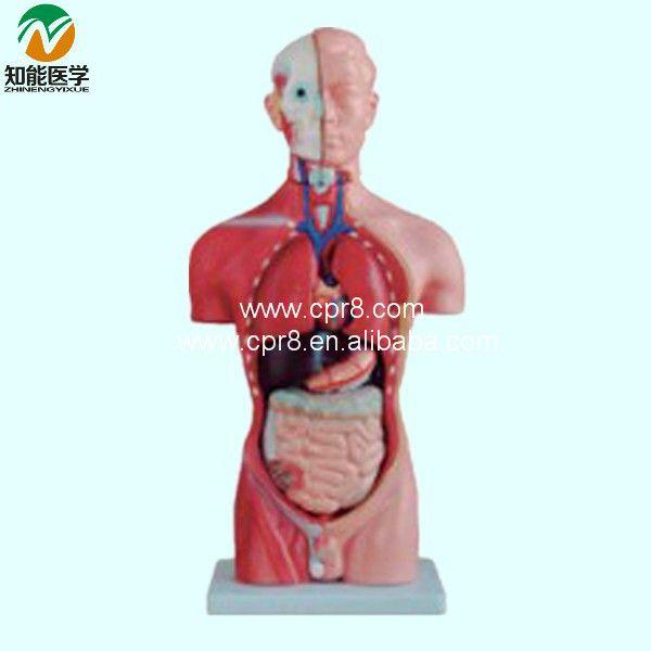 Половина тела мужской торс манекена (13 части) 42 см BIX-A1037