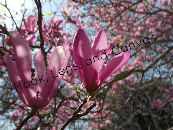 Digital Photo: Pink by HookLensAndCanvas on Etsy