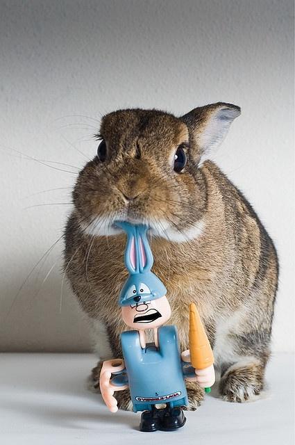 Life feeds on life feeds on life: Bunnies Boards, Funny Bunnies, Bunnies Slayer, Animal Magic, Bunnies Heart, Bunnies Lovin, Animal So, Photo, Bunnies Mama