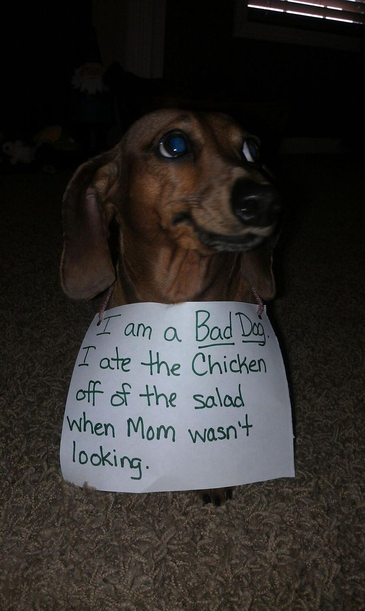 1000 Images About Dog Shaming On Pinterest Best Dogs