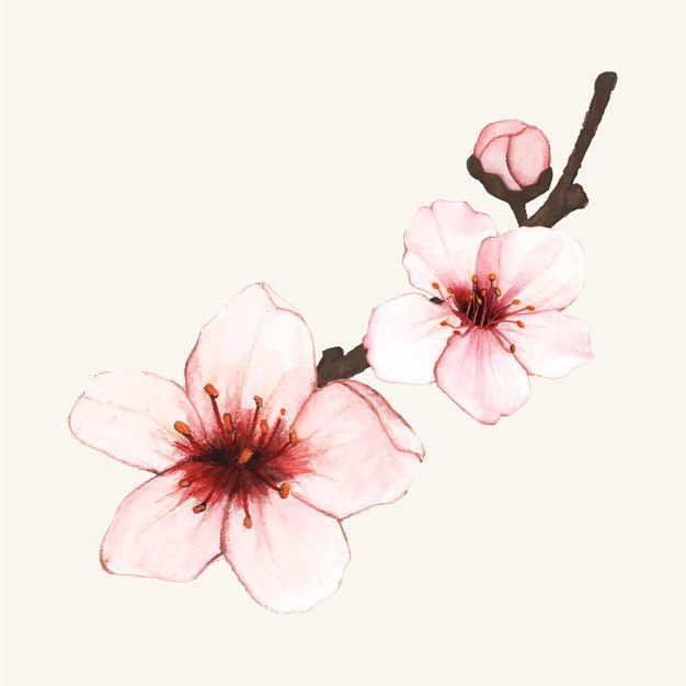 Cherry Blossom Vector Art Download Vectors 1675134 Cherry Blossom Art Cherry Blossom Drawing Cherry Blossom Vector