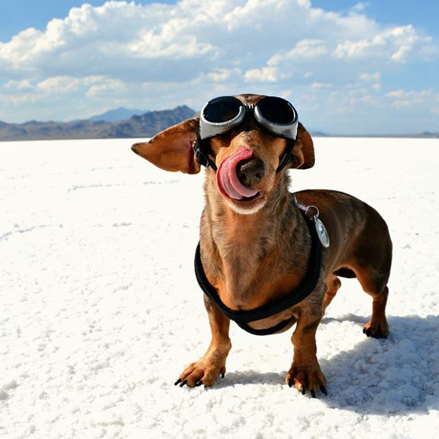 Love Adventurous Dachshunds? Follow us on Instagram! You can also check out our blog at YouDidWhatWithYourWiener.com.