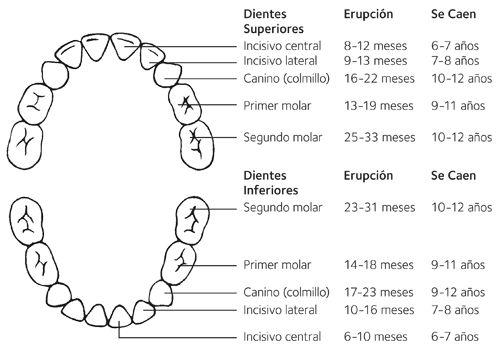 orden-salida-dientes