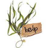 Kelp Dit verbazingwekkende zeewier bevat meer vitaminen en mineralen dan enig ander voedingsmiddel. Kelp bevat vitamine B2, niacine, choline, caroteen en algeninezuur, maar bovendien nog 23 mineralen. Vanwege het gehalte aan natuurlijk jodium, heeft kelp een normaliserende uitwerking op de schildklier. Met andere woorden, magere mensen met schildklierproblemen kunnen in gewicht toenemen door kelp te gebruiken, terwijl gezette mensen gewicht kunnen verliezen door gebruik van kelp.