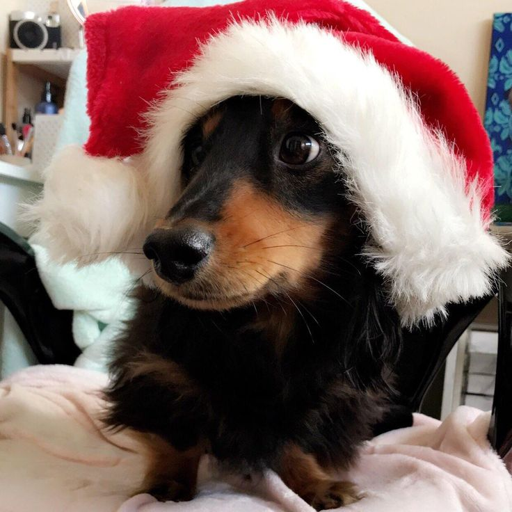 Sorry Im late I was busy taking photos of my dog https://i.redd.it/x65d8fueyezz.jpg