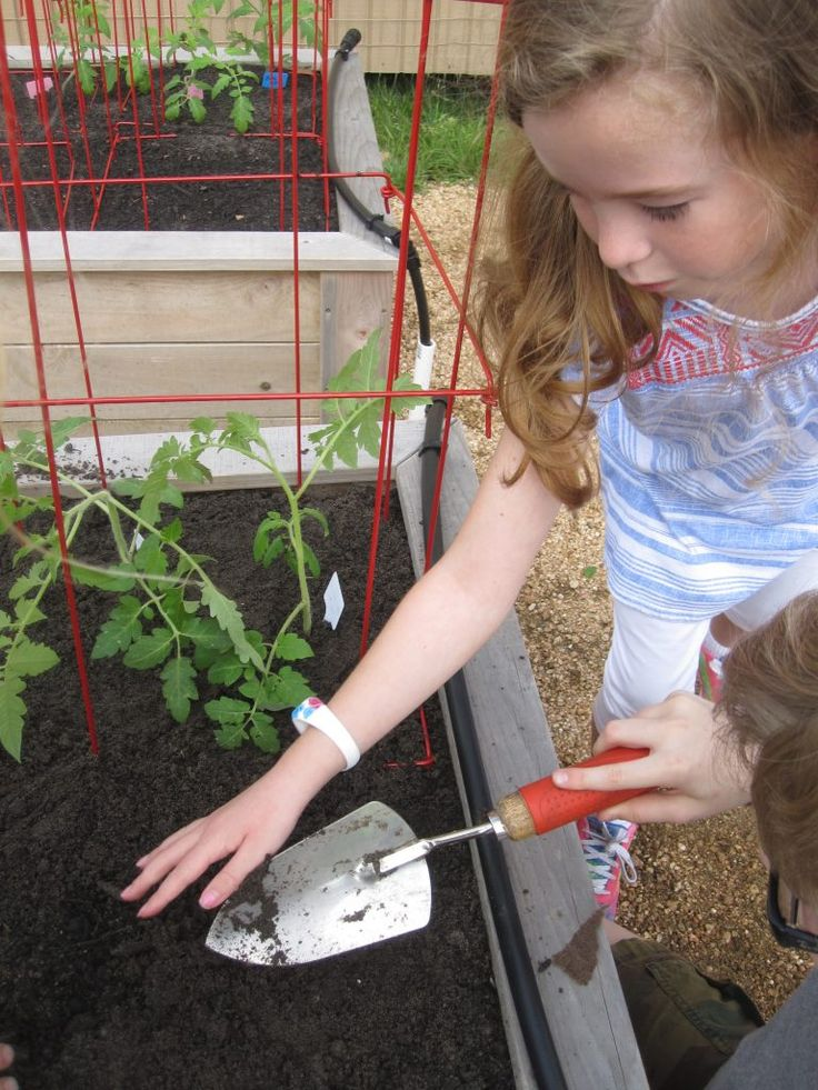In this post, I thought I'd tell you about my favorite school garden tools and equipment… and some of them may surprise you.
