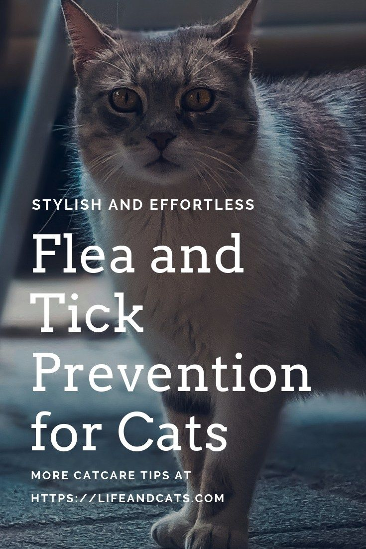They Are Coming Fleas And Ticks 101 Life Cats Cat Fleas Tick Prevention Flea And Tick
