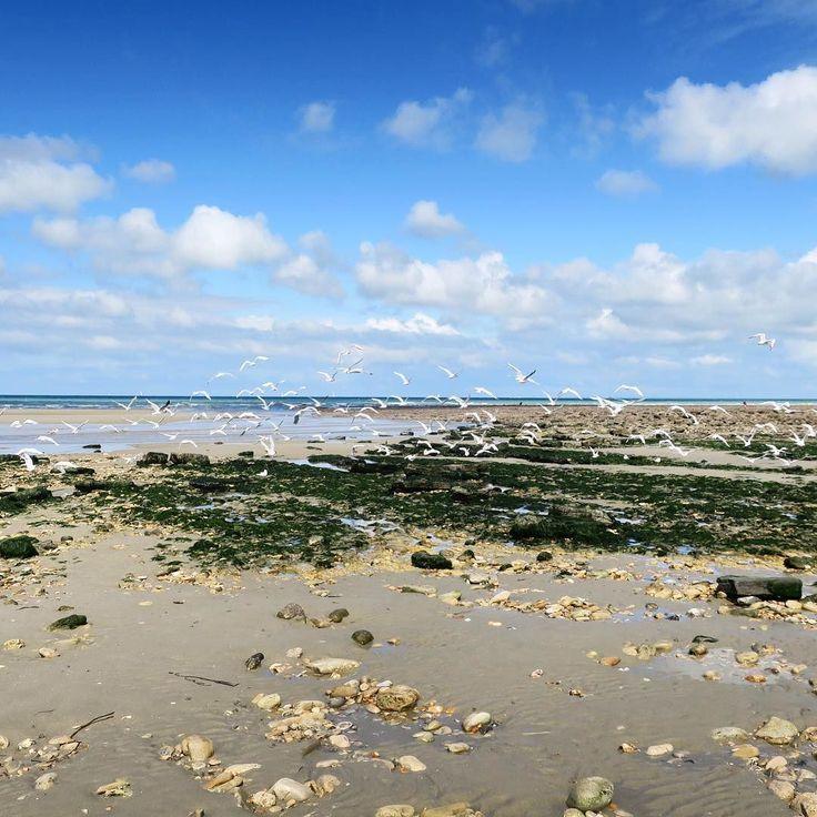 Je ne me lasse pas des paysages de Wimereux  La mer est de mille bleus différents tout au long de la journée la lumière change tout le temps...à chaque fois je suis surprise de trouver ici autant de beauté.  Est ce que vous êtes déjà venus faire un petit tour sur la Côte d'Opale vous aussi ?  #mer #sea #plage #beach #mouettes #paysage #beauté #bleu #blue #wimereux #wimereuxbeach #cotedopale . . I do not get tired of the landscapes of Wimereux  The sea is a thousand different blue throughout…