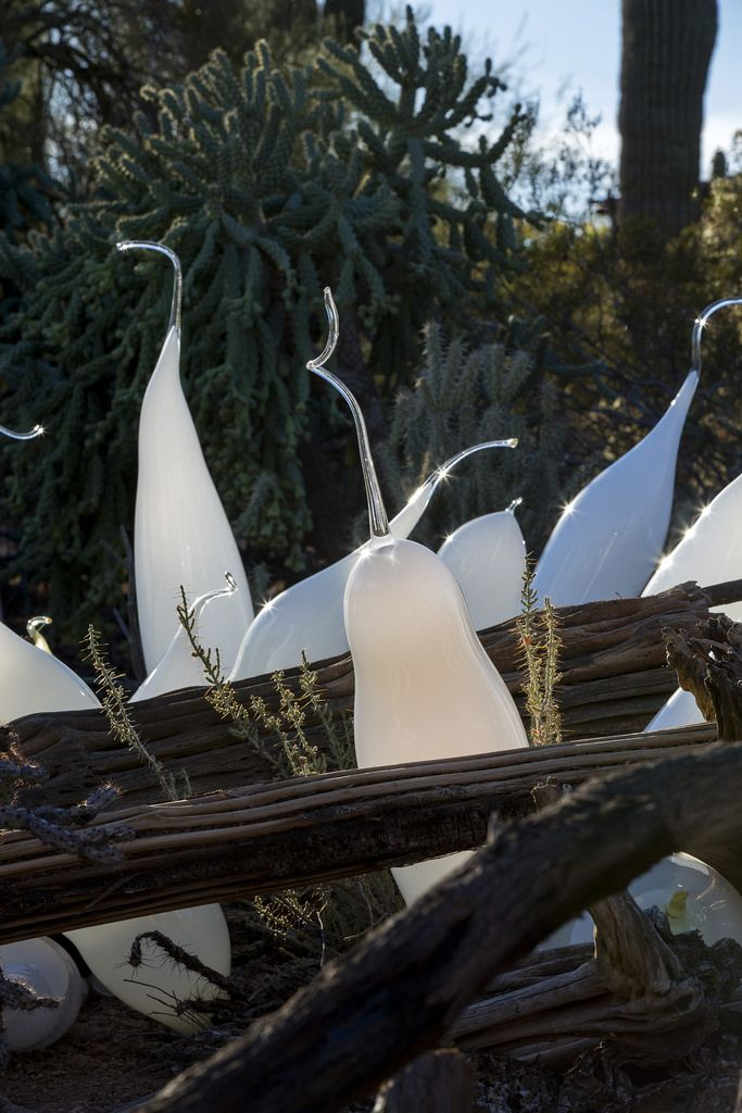 1000 Images About Chihuly Glass Art On Pinterest Missouri Botanical Garden Glass Art And
