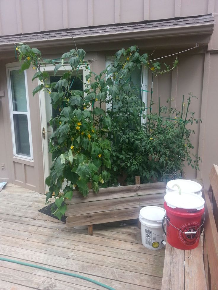 How To Build A 5 Gallon Self Wicking Tomato Watering 640 x 480