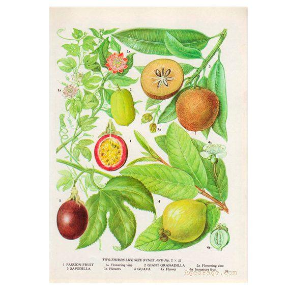 Home Kitchen Decor Picture Fresh Fruit Salad Wall: 1000+ Ideas About Fruit Kitchen Decor On Pinterest