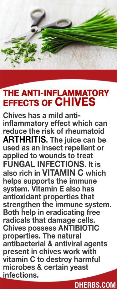 Chives has a mild anti-inflammatory effect which can reduce the risk of rheumatoid arthritis. The juice can be used as insect repellant or applied to wounds to treat fungal infections. It is also rich in vitamin C which helps supports the immune system while Vitamin E strengthens the immune system. Both help eradicate free radicals that damage cells. Chives possess antibiotic properties. The natural antibacterial & antiviral agents in chives with vitamin C helps to destroy harmful microbes…