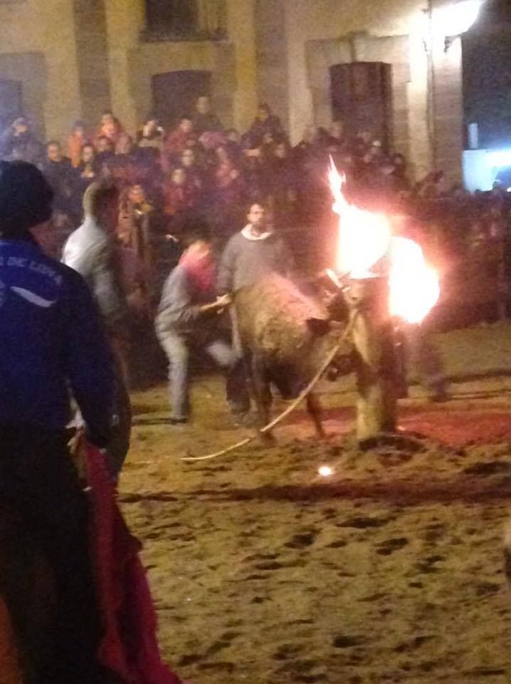 «Toro de Jubilo (/Fuego)» à Medinaceli (Soria) en Espagne. Samedi 12 novembre 2016.