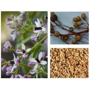 Olio puro al 100% estratto dalla spremitura a freddo dei semi di Azadirachta indica . Utilizzato diluito (rapporto 1:100) con acqua è un alleato indispensabile nella lotta contro parassiti ed insetti