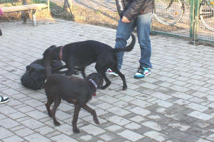 20/11/2014 - Torino con Peja e Ollie