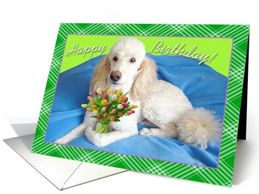 Birthday, White Poodle Holding a Vase of Flowers, Green Stripes card