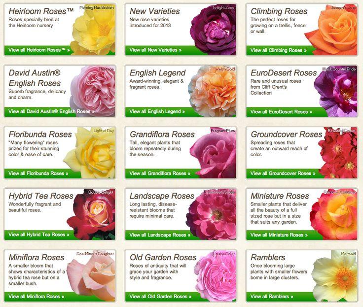 Many Varieties Of Rose Plants Roses Pinterest Plants