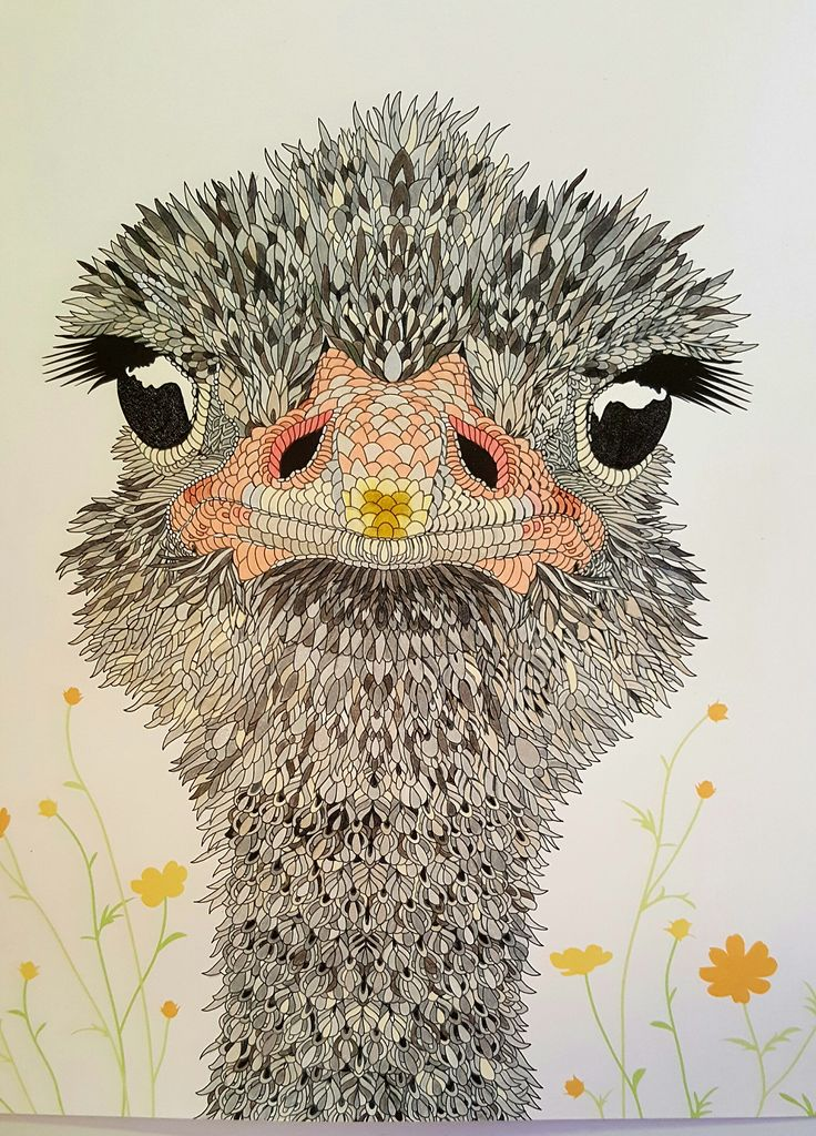 Ostrich From The Book Aviary Colouring Books By Claire Scully Author