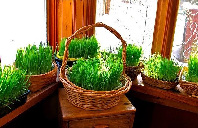 Wheat Grass baskets