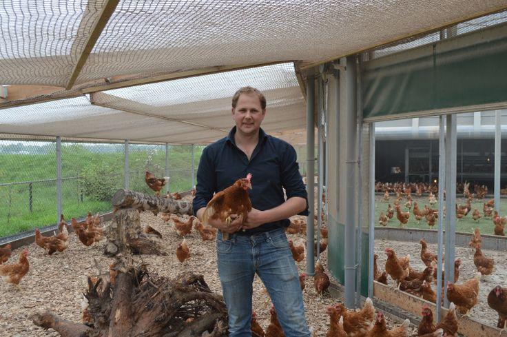 Onze held Peter Koelewijn, Rondeel, is de leverancier van eieren. Rondeel kippen worden in de watten gelegd en hebben 3 verschillende leefruimtes. Het nachtverblijf is bedoeld voor de eerste levensbehoefte van de kip: eten, drinken, rusten en eieren leggen. Het dagverblijf is bedoeld voor de natuurlijke behoefte van de kip zoals scharrelen en stofbaden.